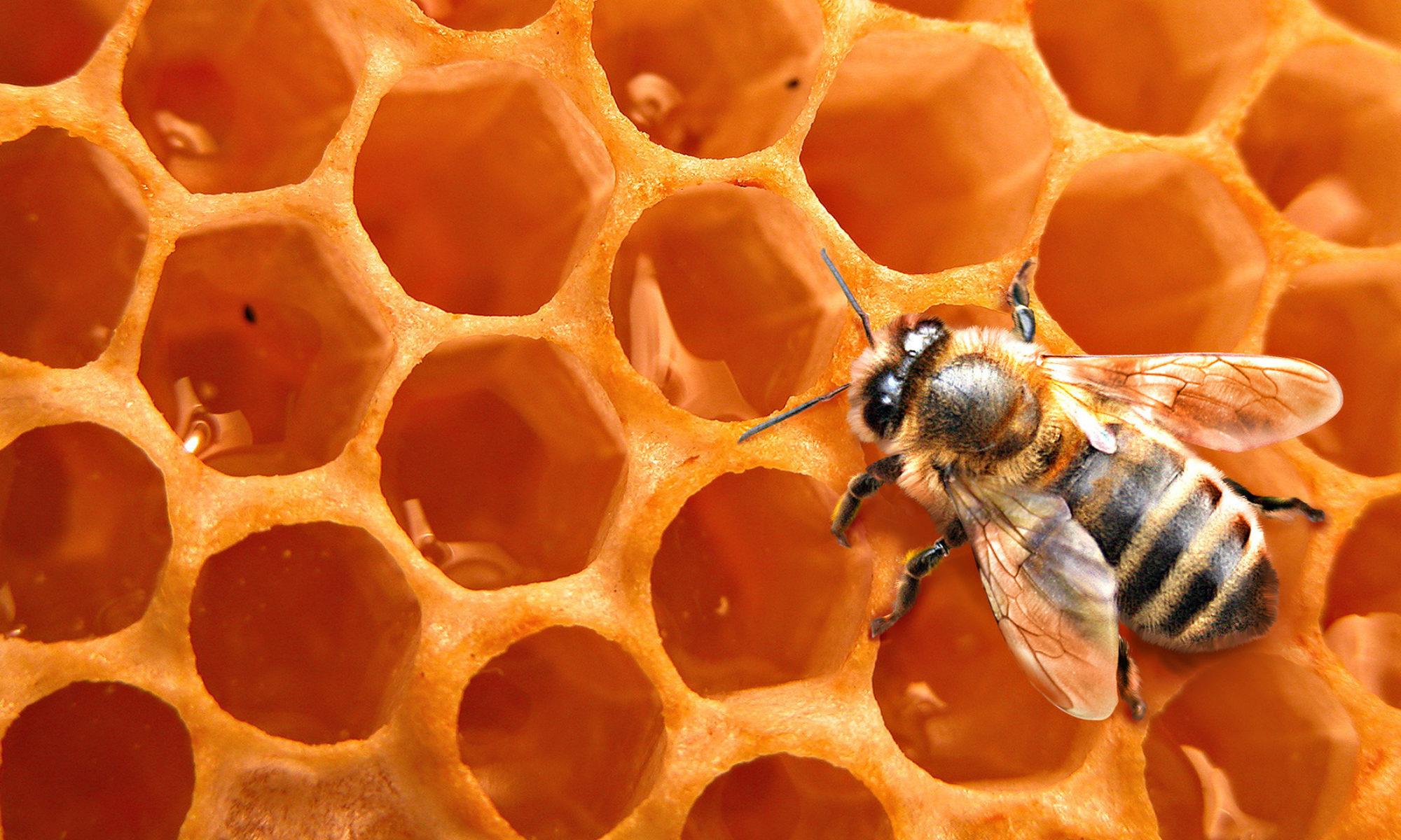 Пчеларска Ферма Мутафови